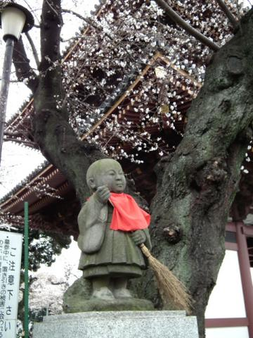 池上本門寺の桜(7)