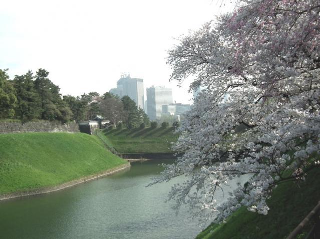 皇居・半蔵門周辺の桜(1)