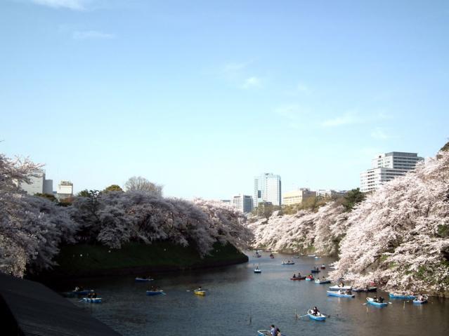 皇居・千鳥ヶ淵の桜(2)