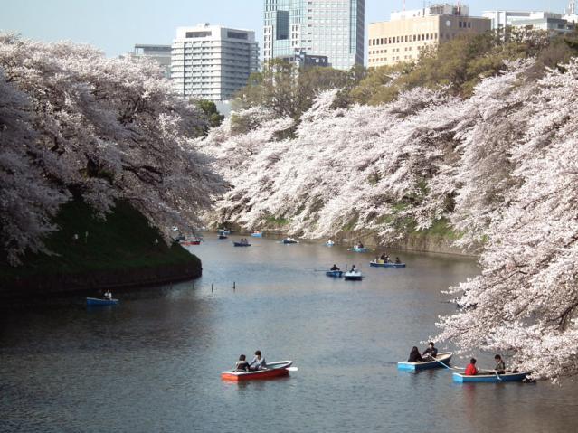 皇居・千鳥ヶ淵の桜(3)