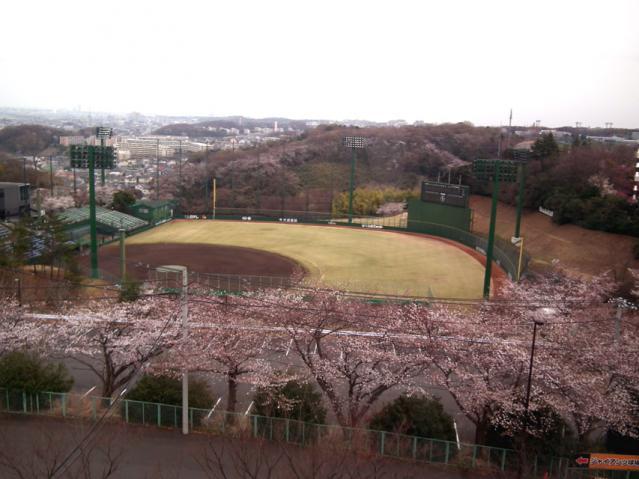 よみうりランド ロープウェイから見た桜とジャイアンツ球場