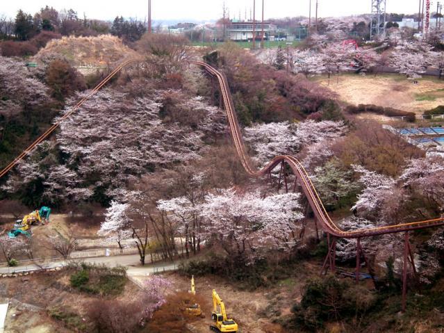 よみうりランド ロープウェイから見た桜(2)