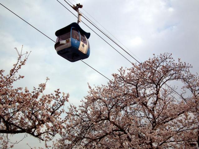 よみうりランドの桜とロープウェイ