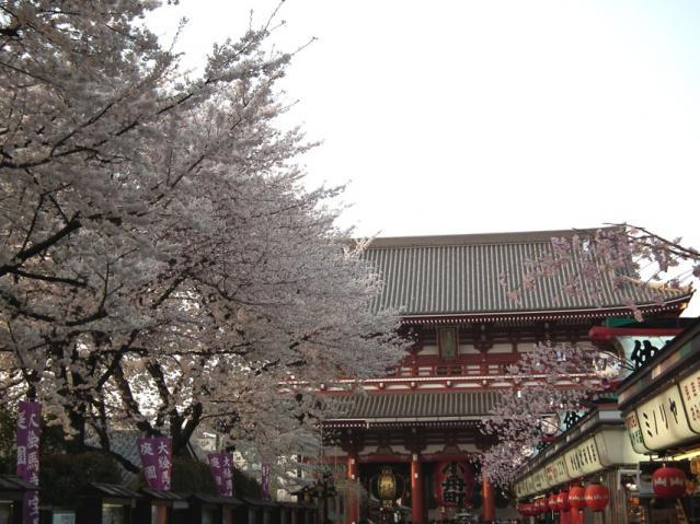 浅草寺 仲見世通りの桜