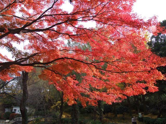 2012年 三ッ池公園の紅葉(1)