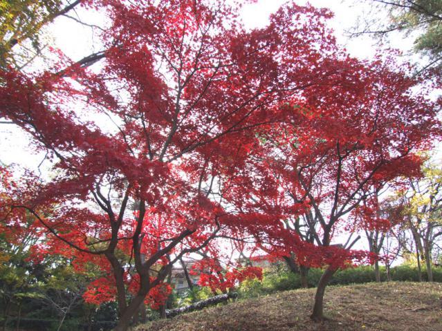 2012年 三ッ池公園の紅葉(2)