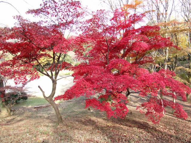 2012年 三ッ池公園の紅葉(3)