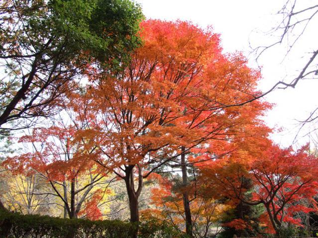 2012年 三ッ池公園の紅葉(5)