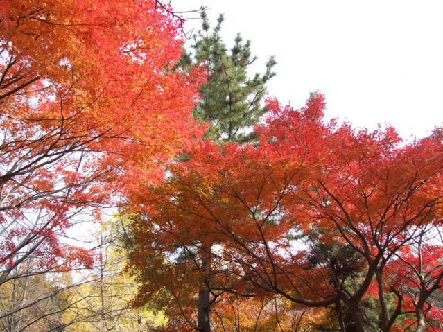 2012年 三ッ池公園の紅葉(6)