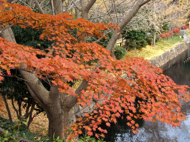 2012年 三ッ池公園の紅葉(7)