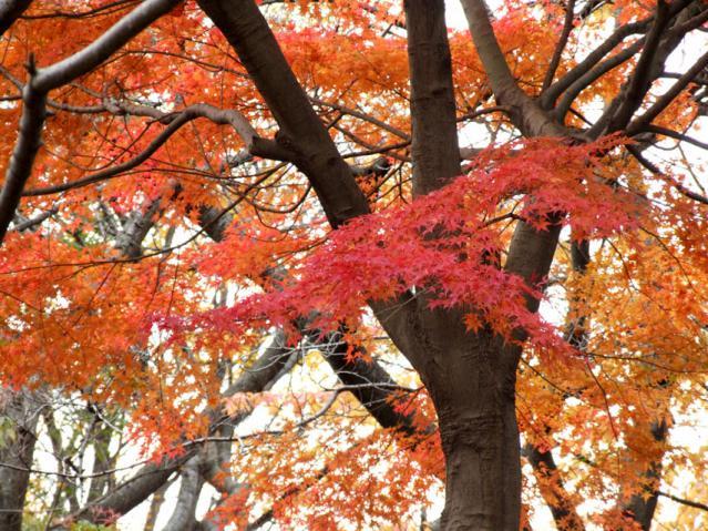 2012年 三ッ池公園の紅葉(8)