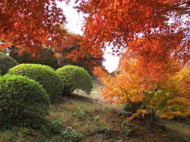 2012年 三ッ池公園の紅葉(9)