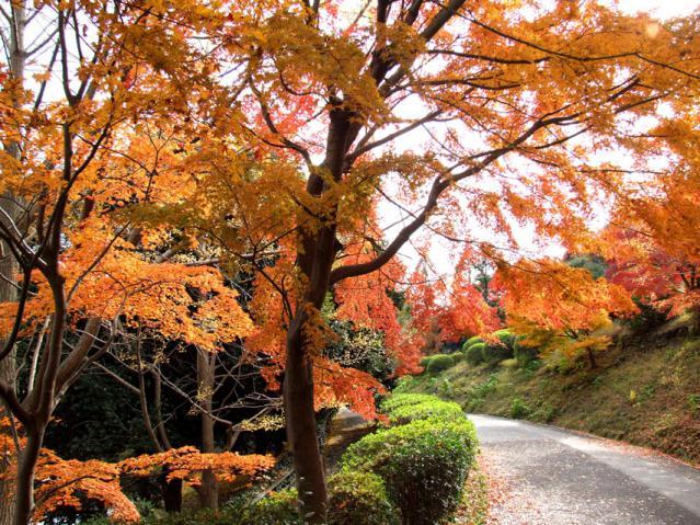 2012年 三ッ池公園の紅葉(10)