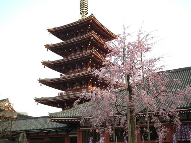 浅草寺の塔と桜