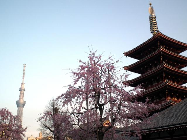 浅草寺の塔と桜と東京スカイツリー