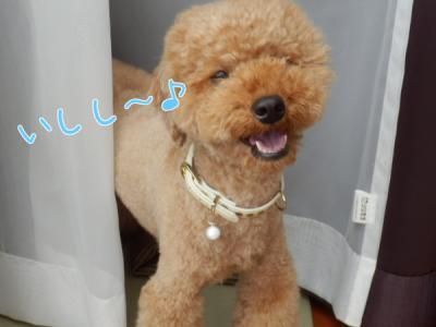 ishishi~