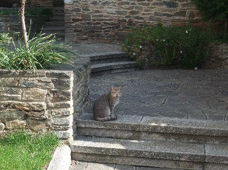 ビルギの猫