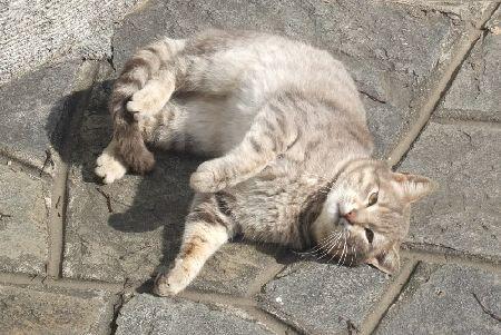 ビルギの猫2