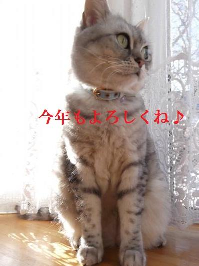 DSCF9269_convert_20130101102742.jpg