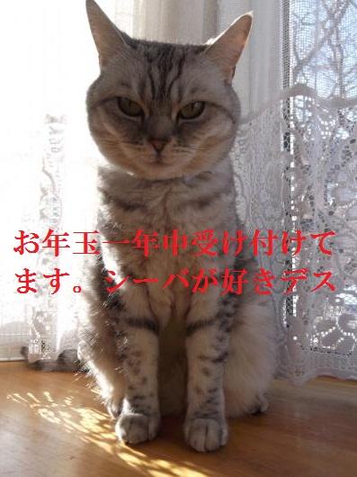 DSCF9270_convert_20130101102811.jpg