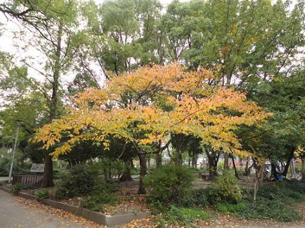 寂しい秋の公園⑤