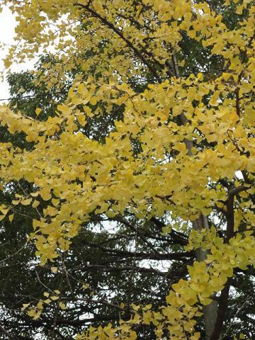 寂しい秋の公園①