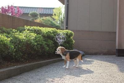 ai-20130515-oniwa02.jpg