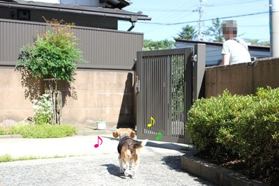 ai-20130627-oniwa01.jpg
