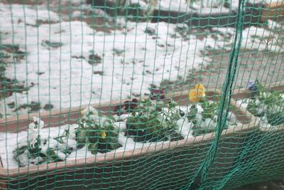 flower-20130331.jpg