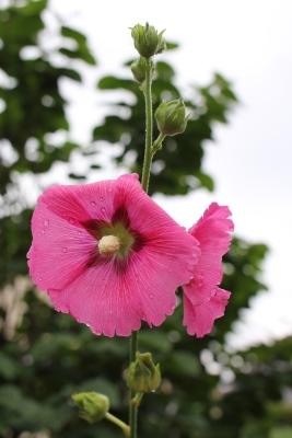 flower-20130711.jpg