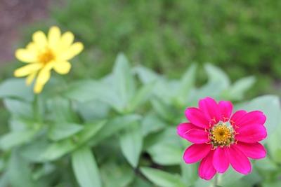 flower-20130729.jpg