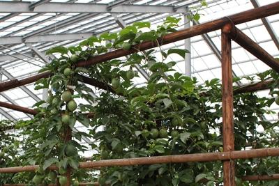 fruit-20130726-nangoku01.jpg