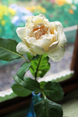 rose-20130608.jpg