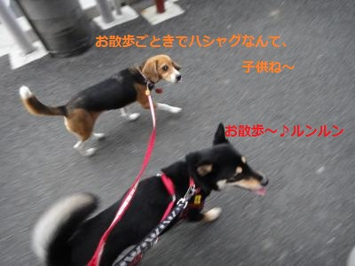 DSC01485_convert_20110731211657.jpg