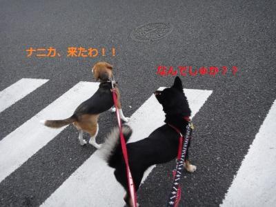 DSC01490_convert_20110731211856.jpg