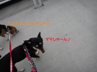 DSC01491_convert_20110731211927.jpg