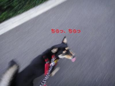 DSC01496_convert_20110731212203.jpg