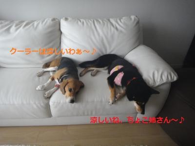 DSC01578_convert_20110806160109.jpg