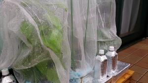 2013-10-24 雨のベランダ2