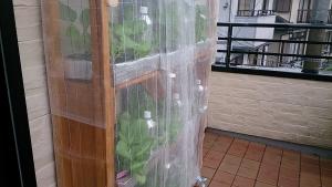 2013-10-24 雨の栽培棚2