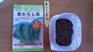 2013-10-14 黄からし菜 種蒔き