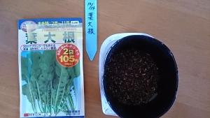 2013-10-14 葉大根 種蒔き
