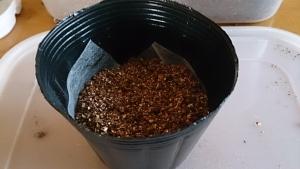 2013-11-1 定植用 ポットへ土を