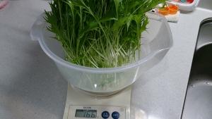 2013-11-02 水菜収穫量1