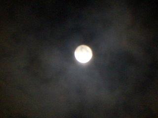 2010_0923bee写真0020