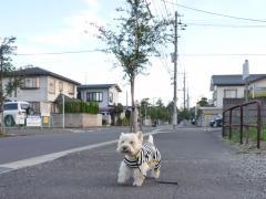 kyoukarasikkodooritoyobu2.jpg