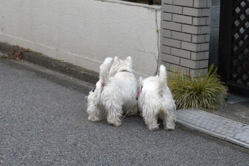 akinohihaturubeotosi4.jpg
