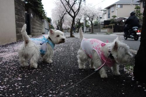 hanagasukinawakejya4.jpg