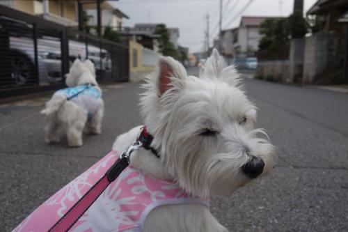 hanagasukinawakejya5.jpg