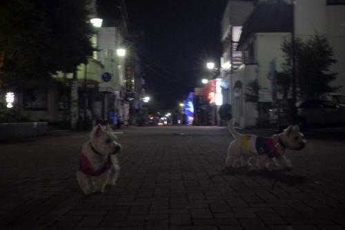 mikasakaikandeyushokuhe6.jpg